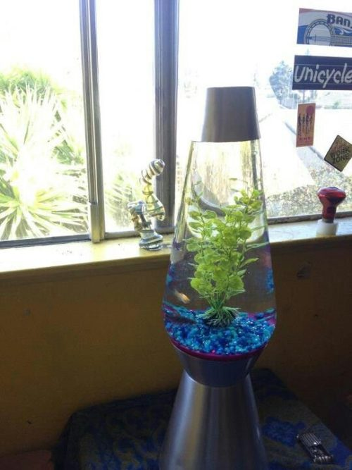 fish-lava-lamp-photo-9
