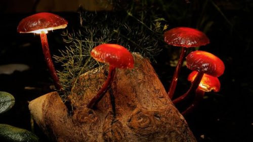 magic-mushroom-lamp-photo-10
