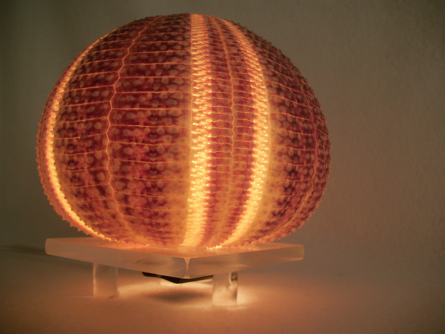 Sea Urchin Lamp The Design Of The Aquatic Animal