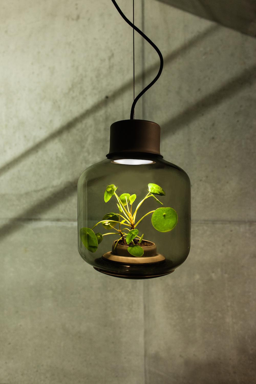 terrarium-lamp-photo-12