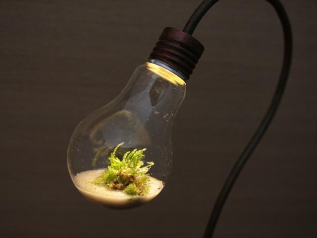 terrarium-lamp-photo-14