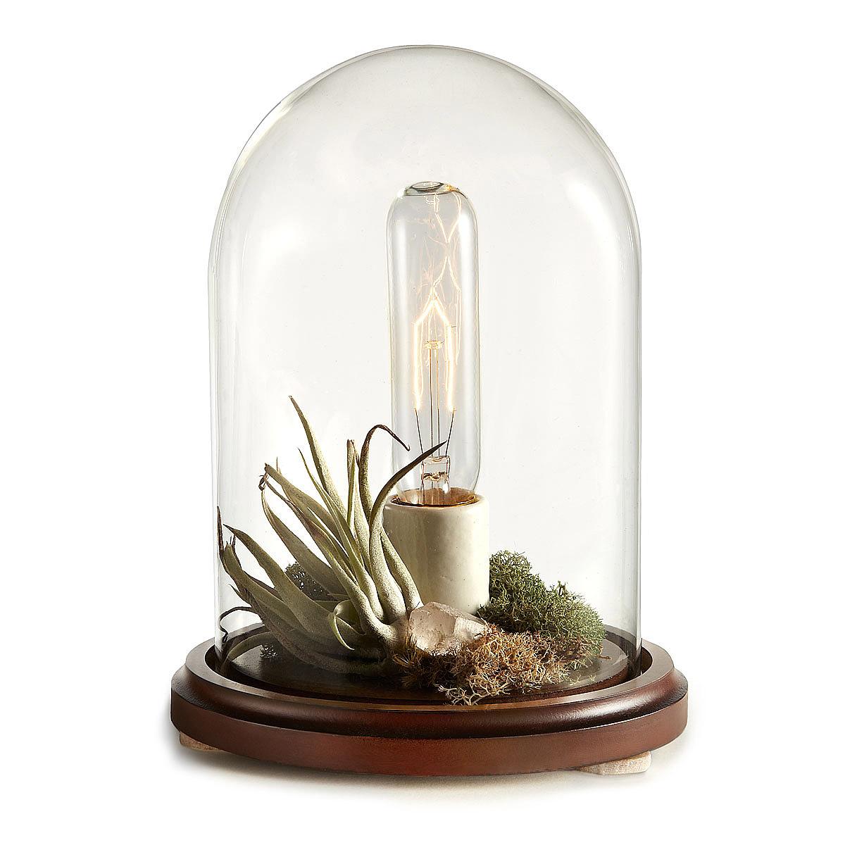 terrarium-lamp-photo-15