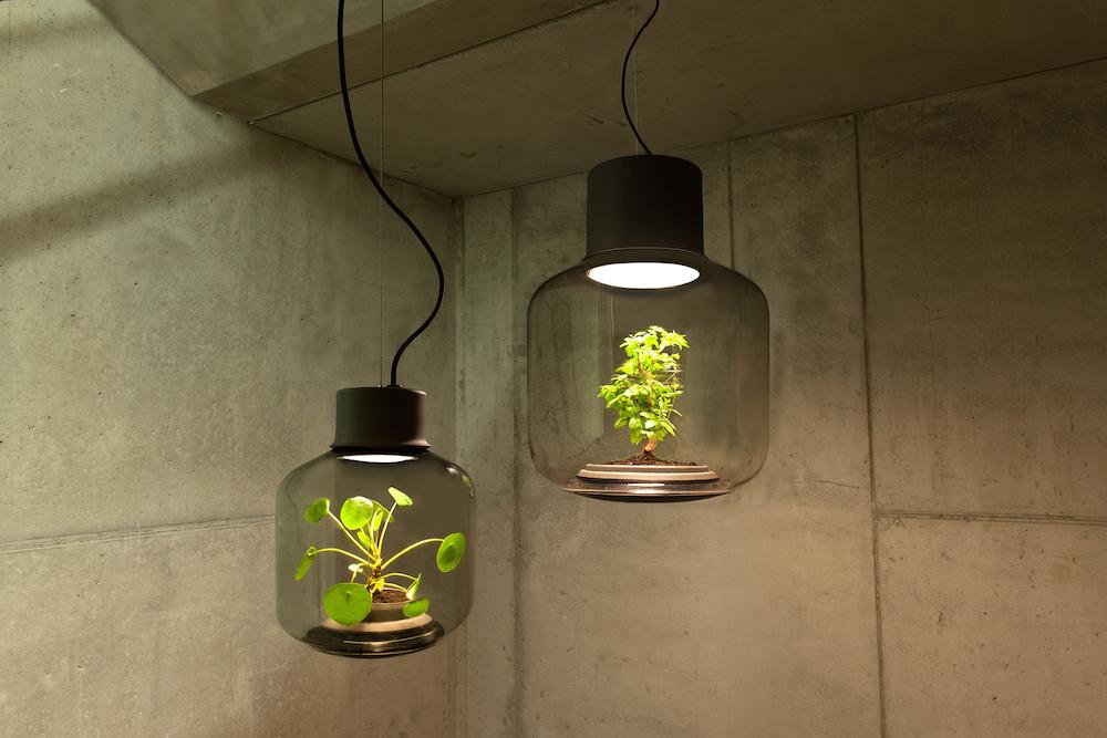 terrarium-lamp-photo-6