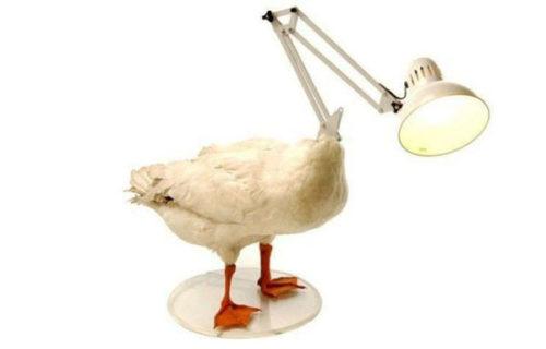 weird-lamps-photo-6