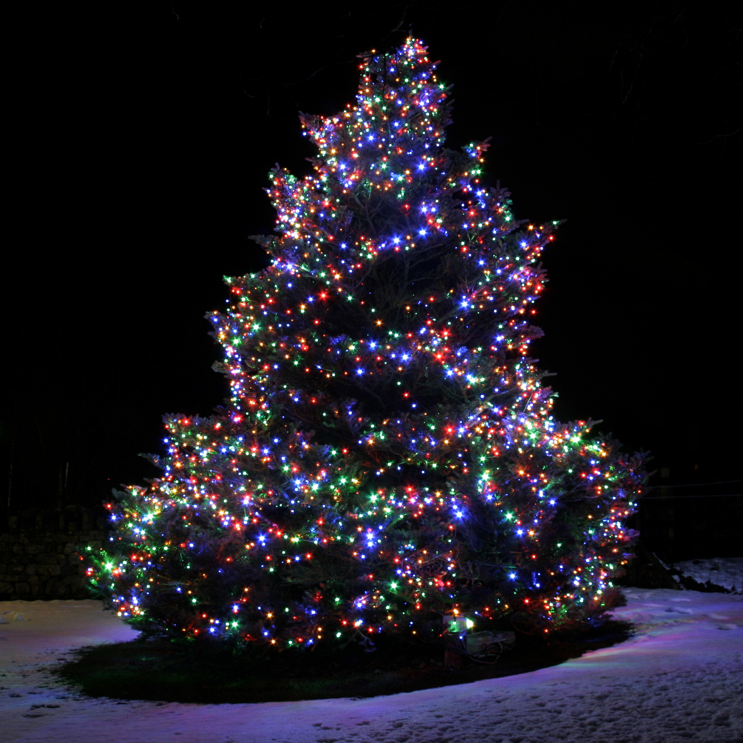 10 things to consider before installing christmas lights on outdoor trees