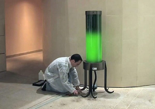 algae lamp photo - 1