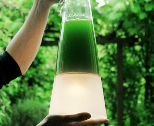 algae lamp photo - 2