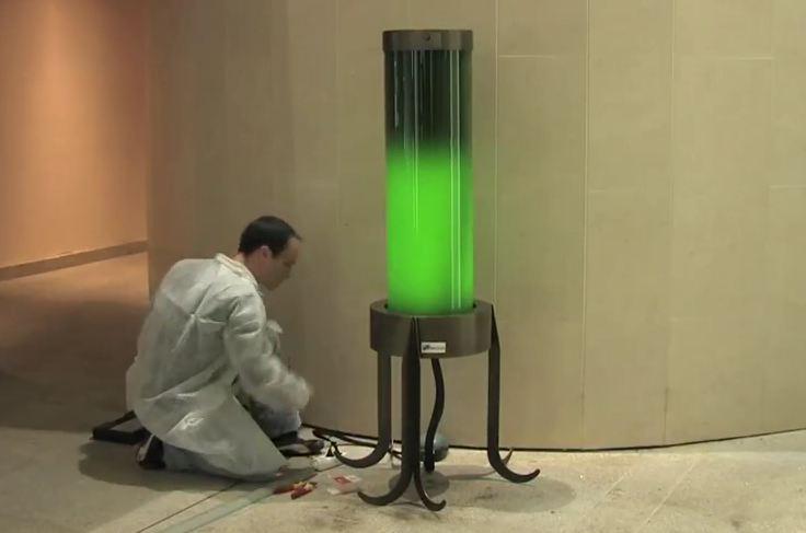 algae lamp photo - 5