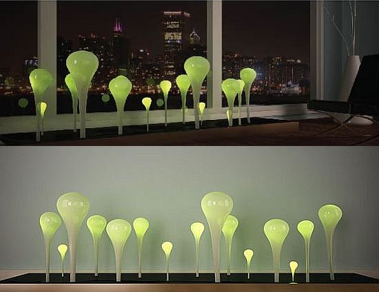 algae lamp photo - 6