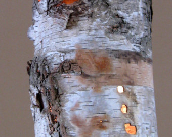 birch lamp photo - 8