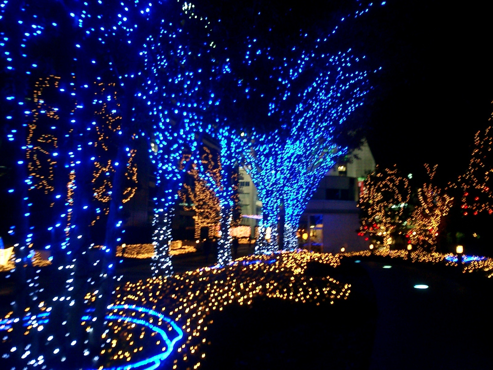 blue and white outdoor christmas lights photo - 8