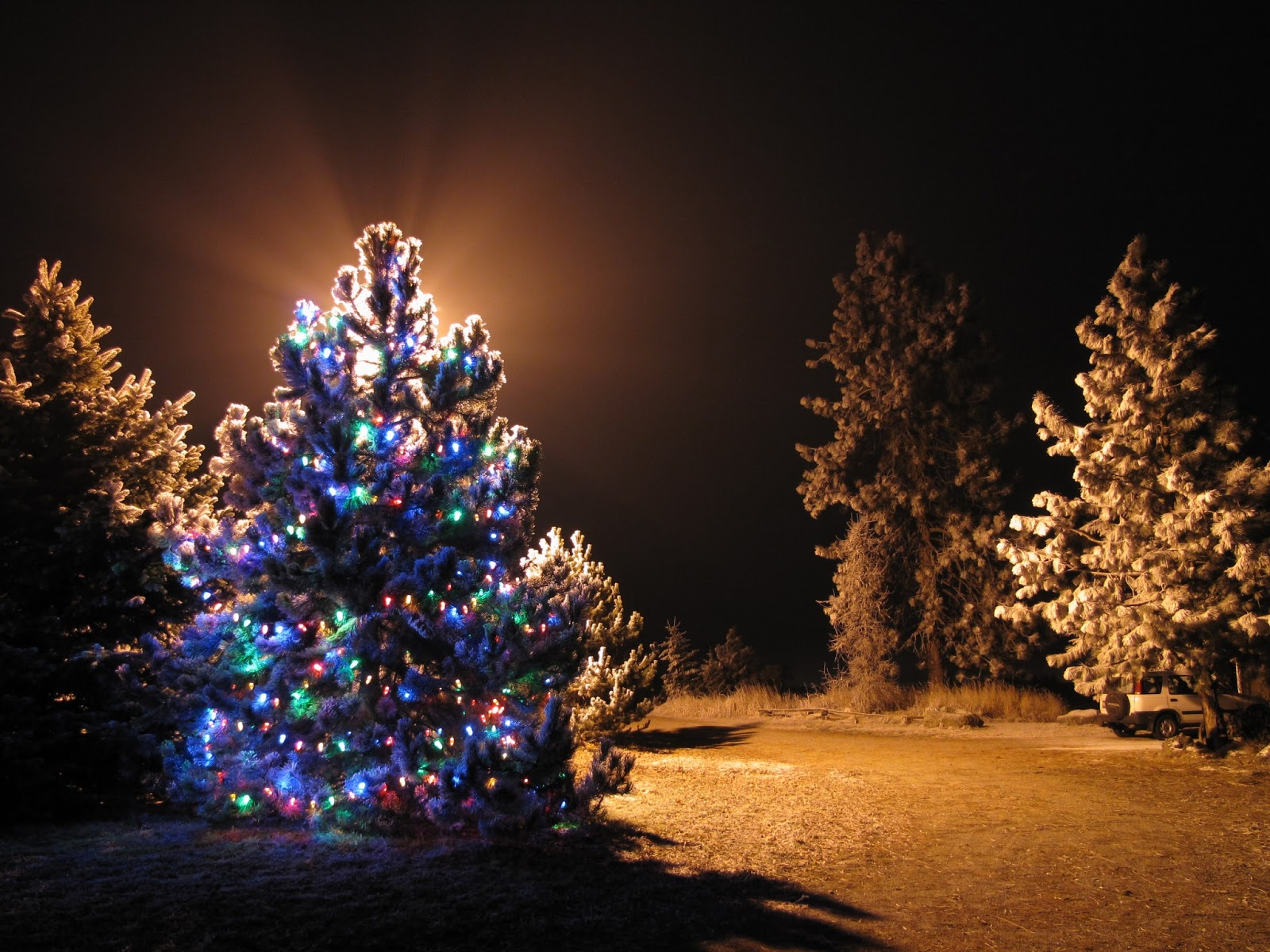 christmas light trees outdoor photo - 6