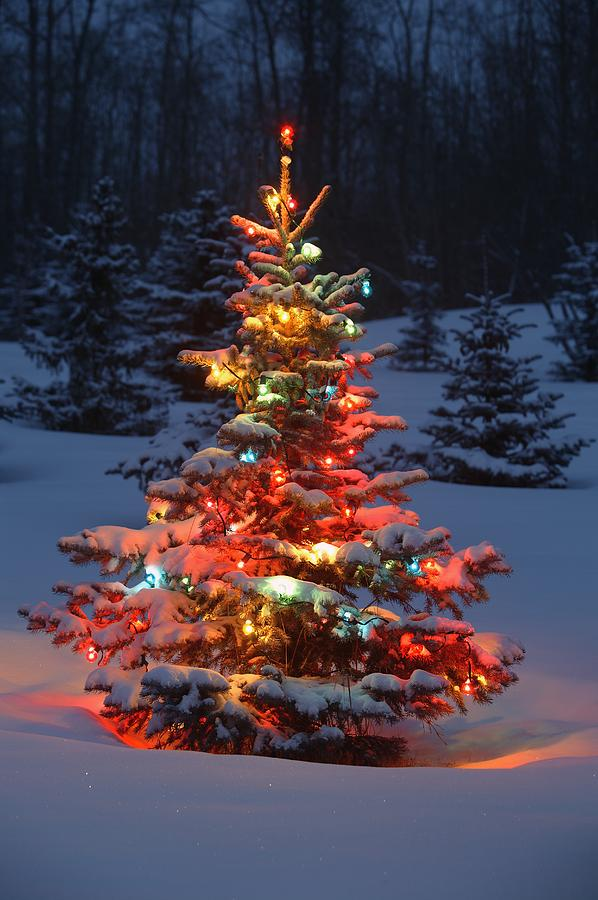 christmas lights in trees outdoors photo - 1