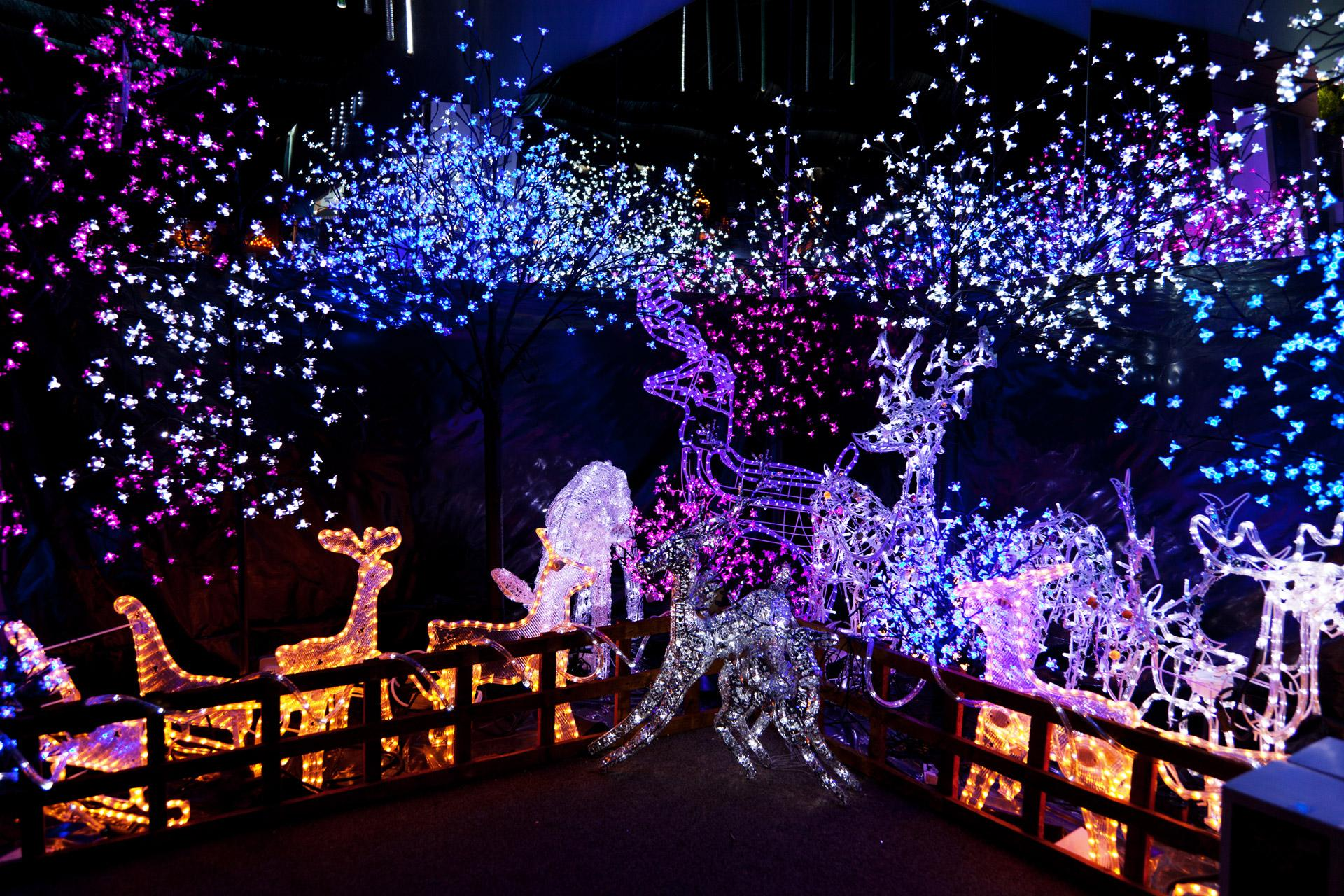 christmas lights in trees outdoors photo - 10