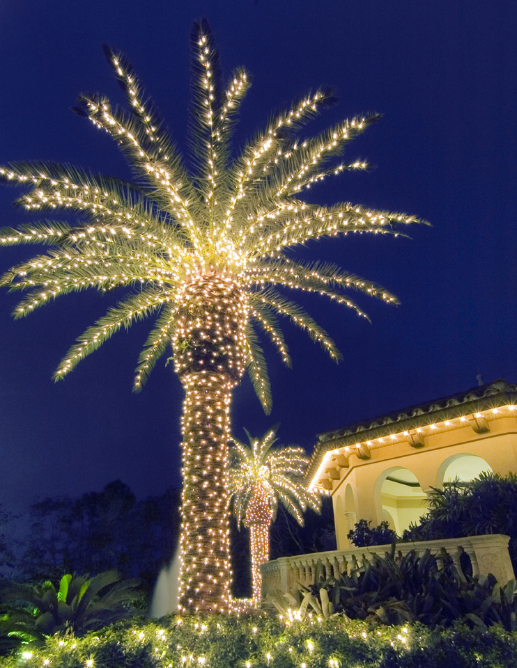 christmas lights in trees outdoors photo - 2