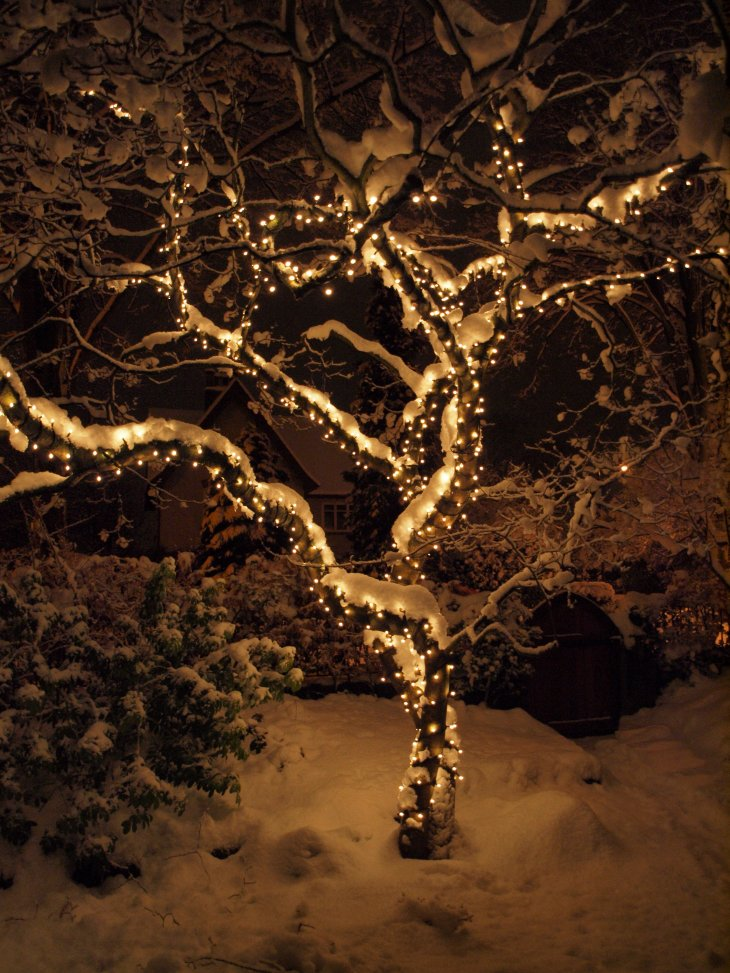 christmas lights in trees outdoors photo - 4