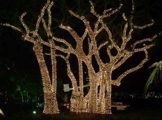 christmas lights in trees outdoors photo - 6