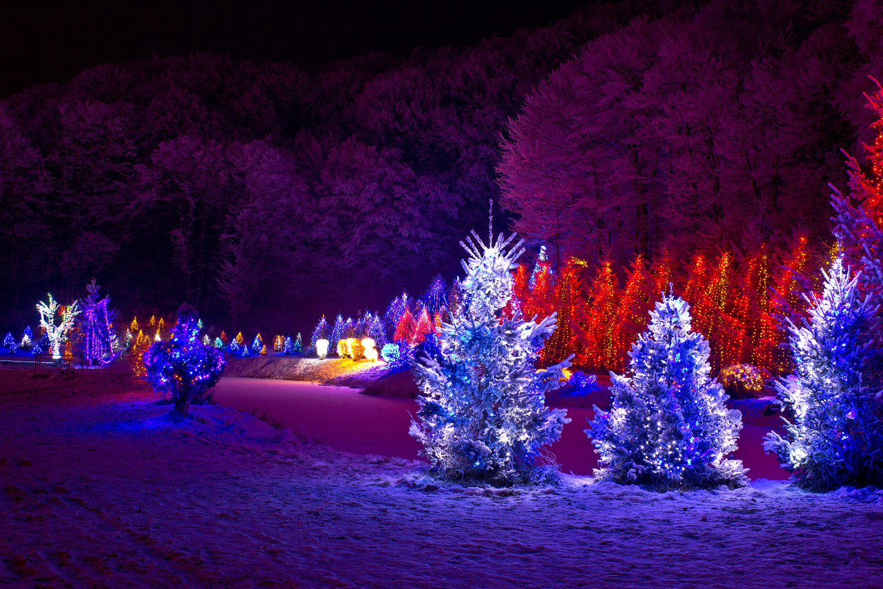christmas lights in trees outdoors photo - 8