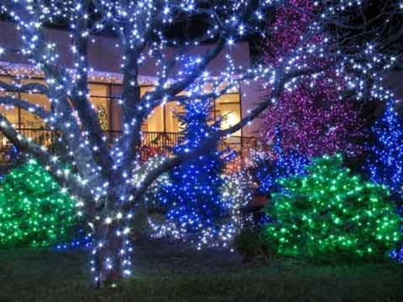 christmas lights on outdoor trees photo 10