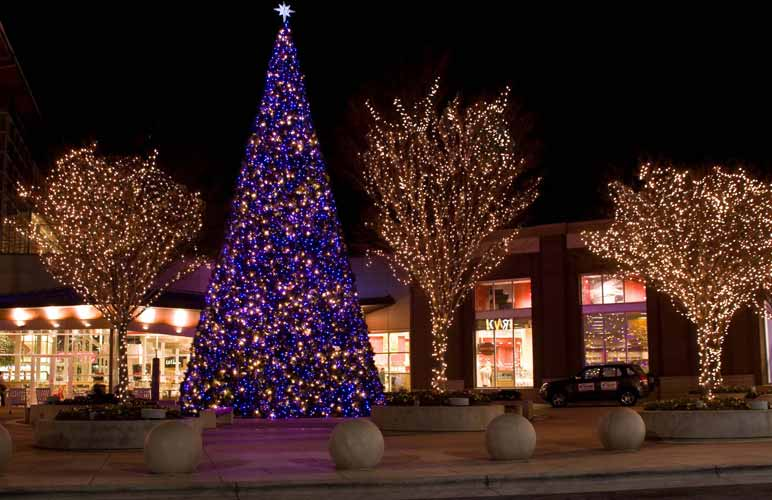 christmas lights on outdoor trees photo - 3