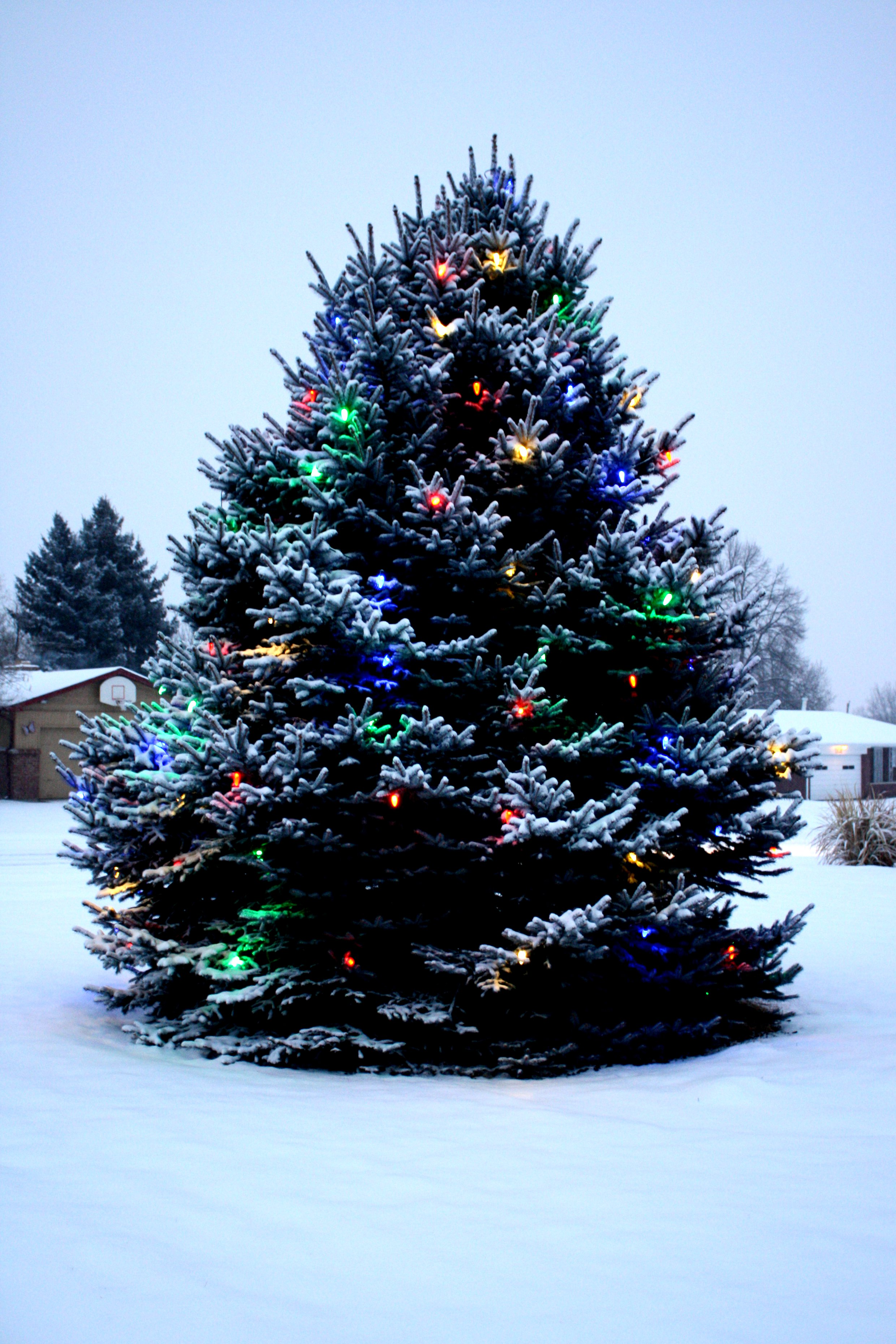 christmas lights on outdoor trees photo - 9