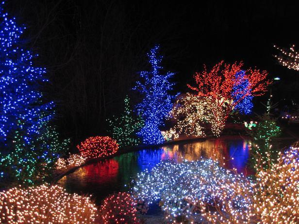 christmas outdoor net lights photo - 2