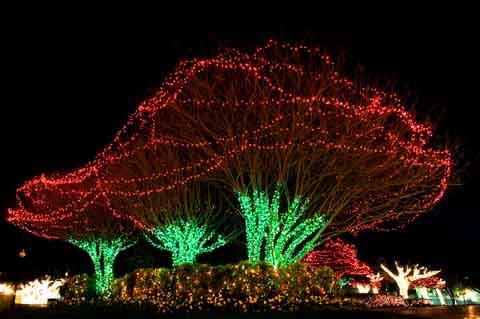 easy outdoor christmas lights photo - 6