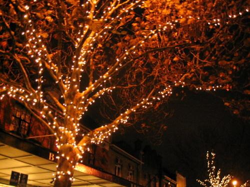 fairy lights outdoor photo - 2