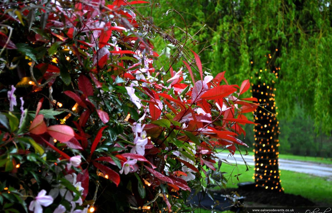fairy lights outdoor photo - 9
