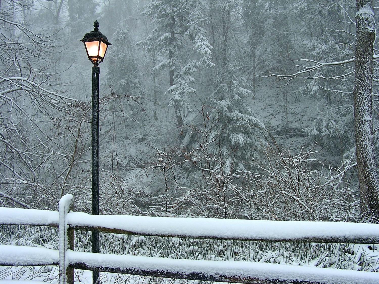 fine art lamp photo - 3