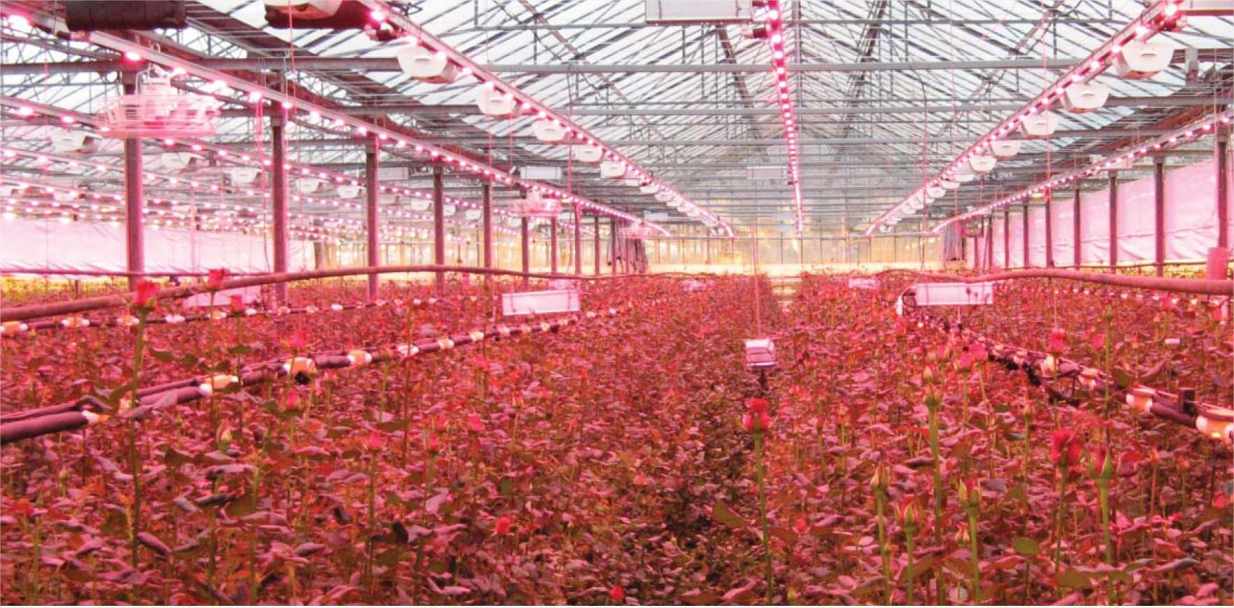 Lighting for indoor plants - Grow Lamps For Indoor Plants Photo 4