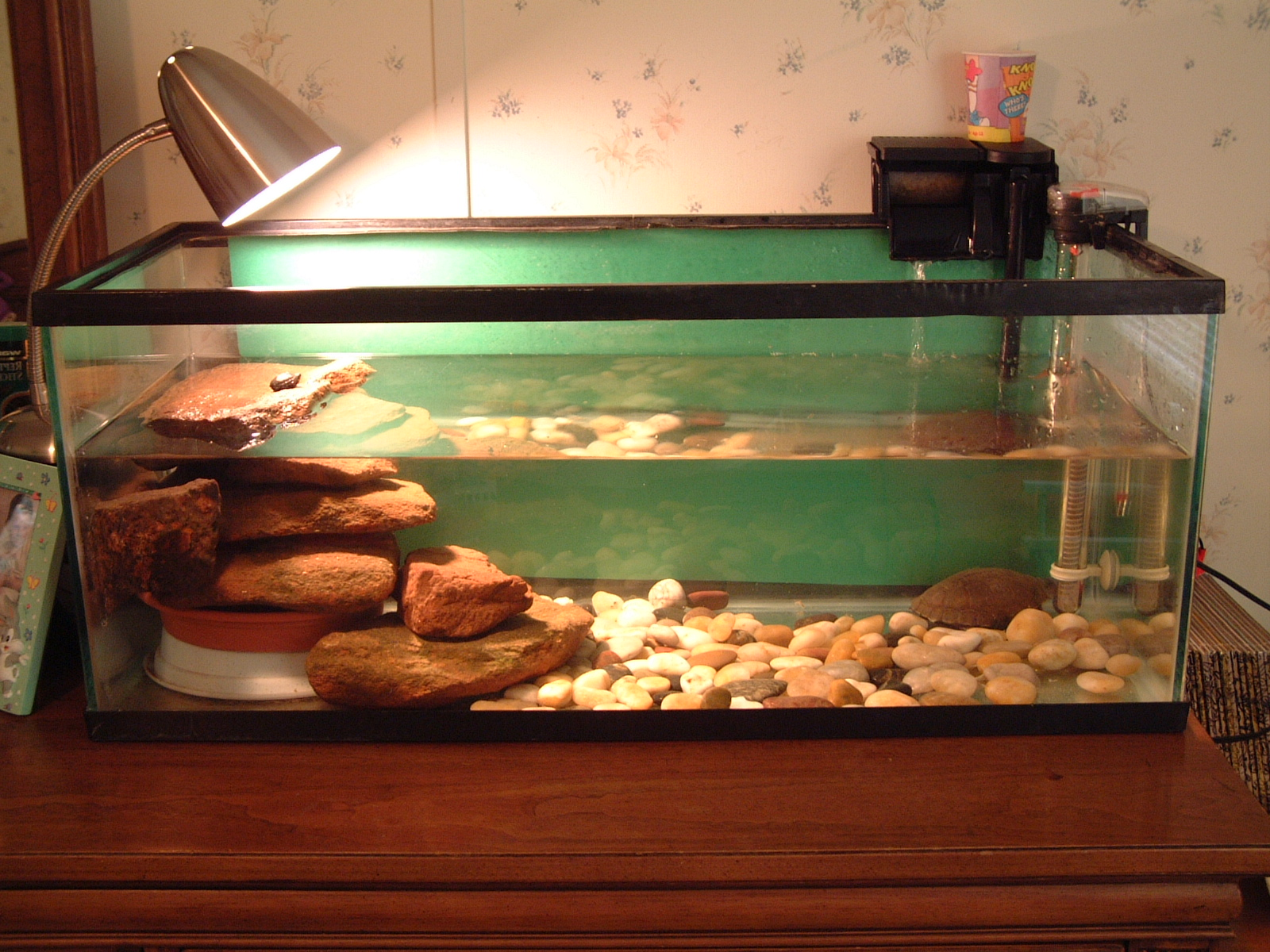heat lamp for turtles photo - 10