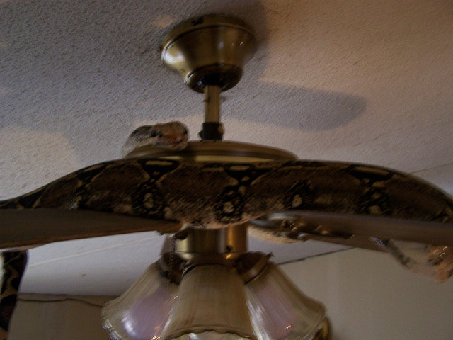nice ceiling fans photo - 7