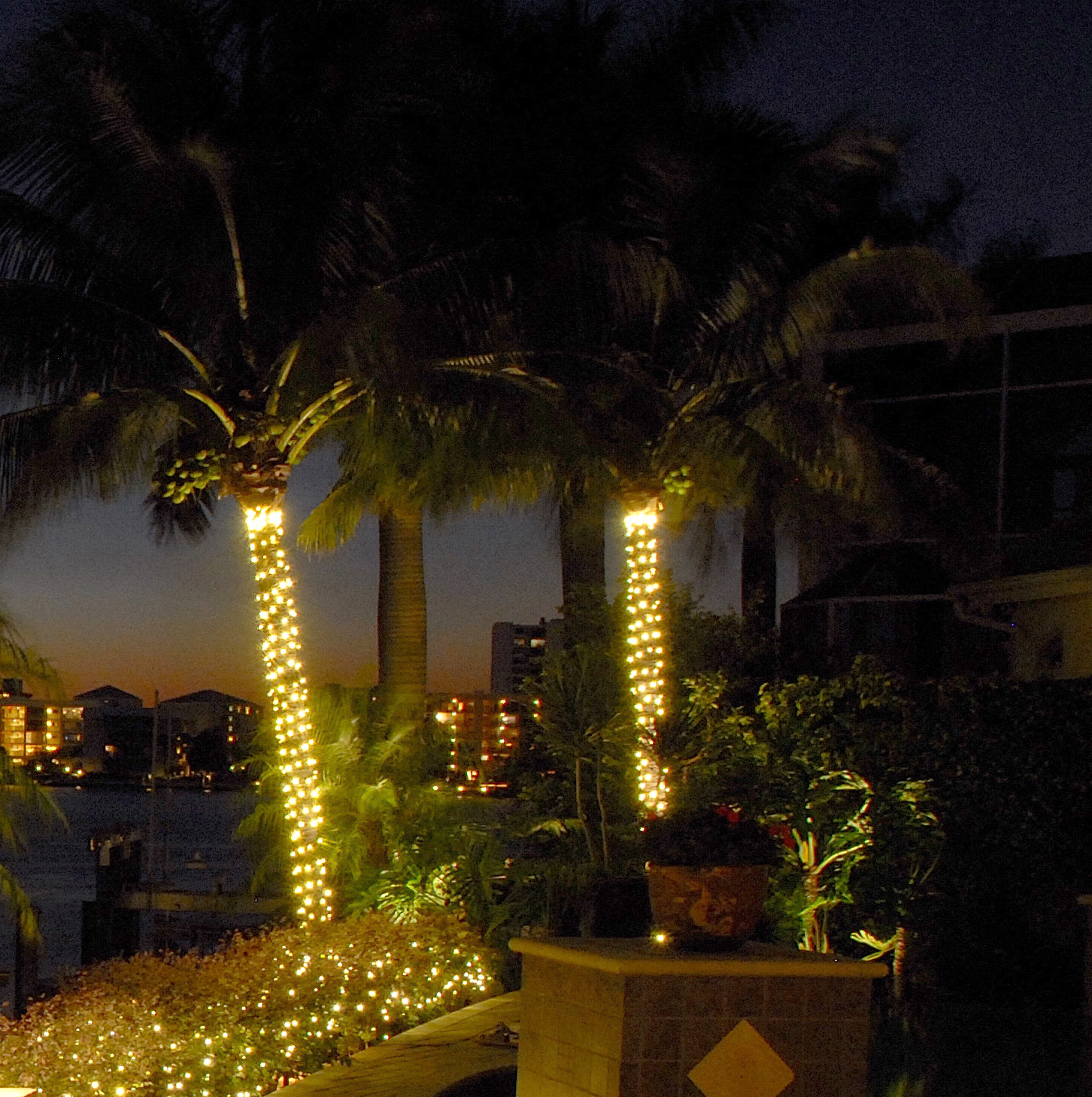 Proper Way To String Lights On A Christmas Tree : 10 things you should know about Palm tree outdoor lights Warisan Lighting