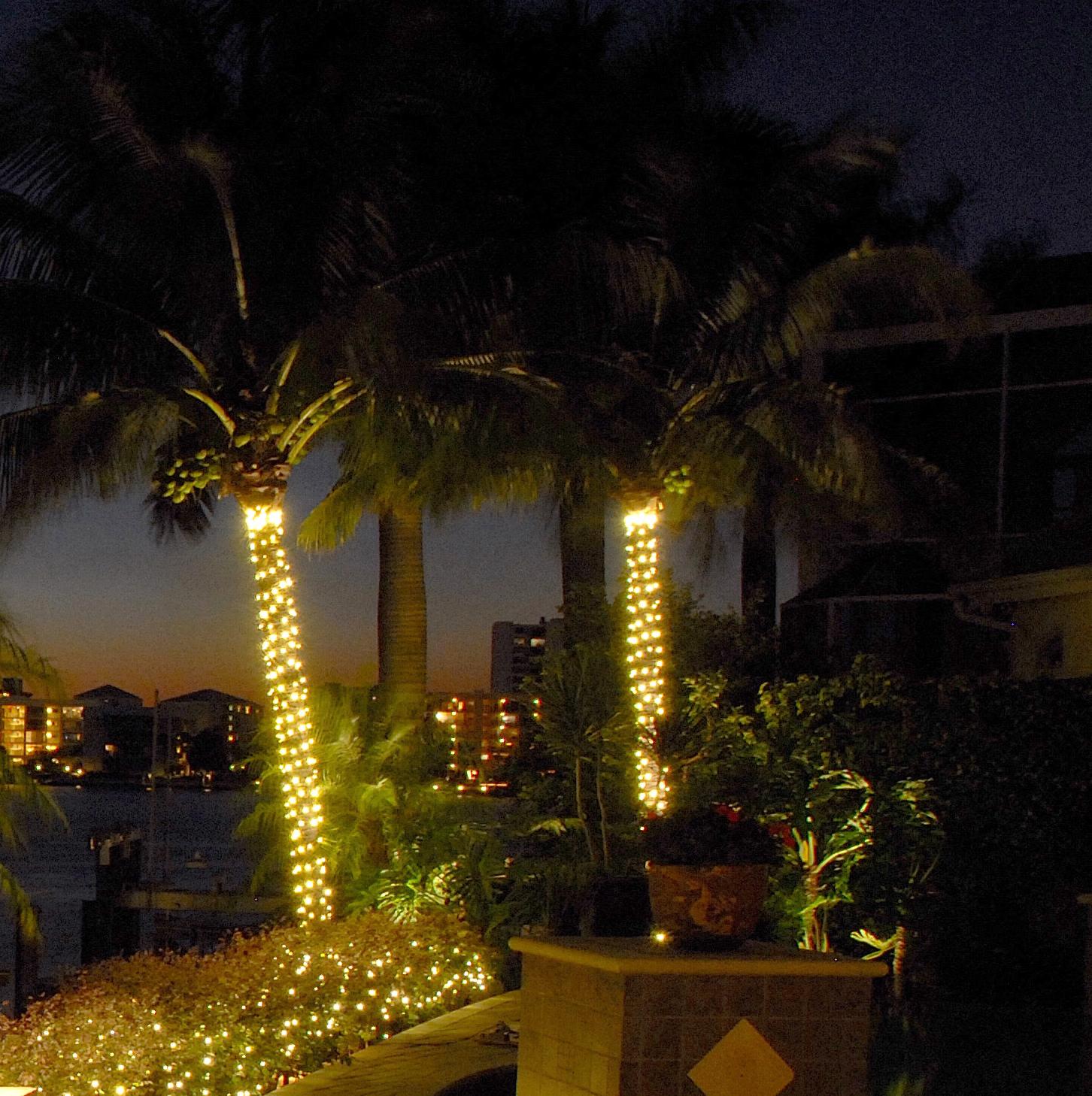 palm tree outdoor lights photo - 3