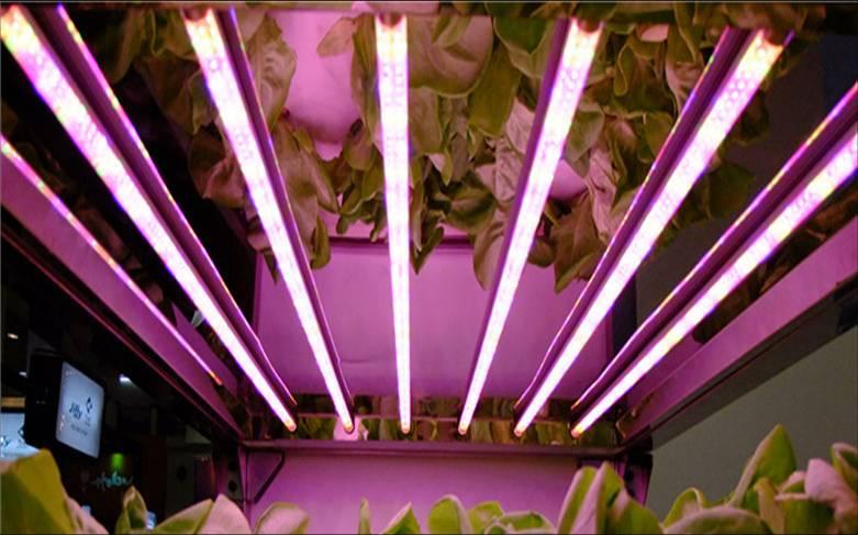 plant grow lamp photo - 10