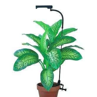 plant grow lamp photo - 5