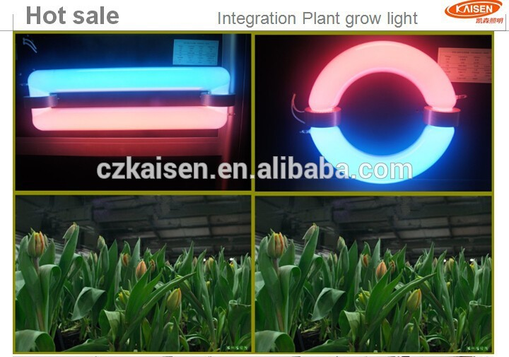 plant grow lamp photo - 6
