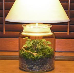 terrarium lamp photo - 1